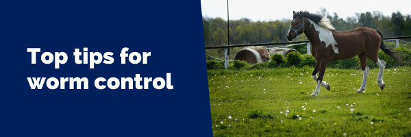 Top tips for worm control