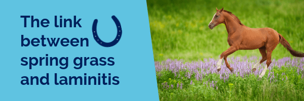 The link between spring grass and laminitis