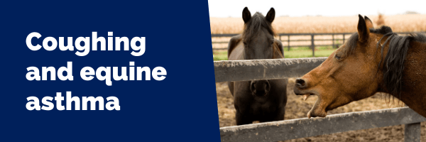 Coughing and equine asthma