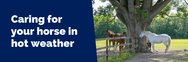 Caring for your horse in hot weather