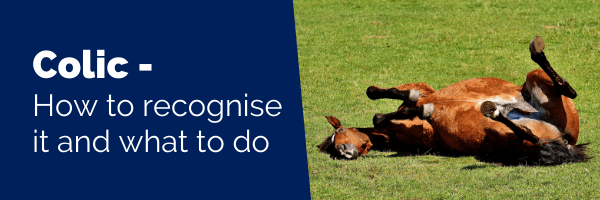 Colic - how to recognise it and what to do